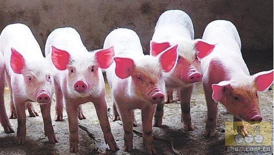 [周]要防止生猪价格过度下跌和过快上涨