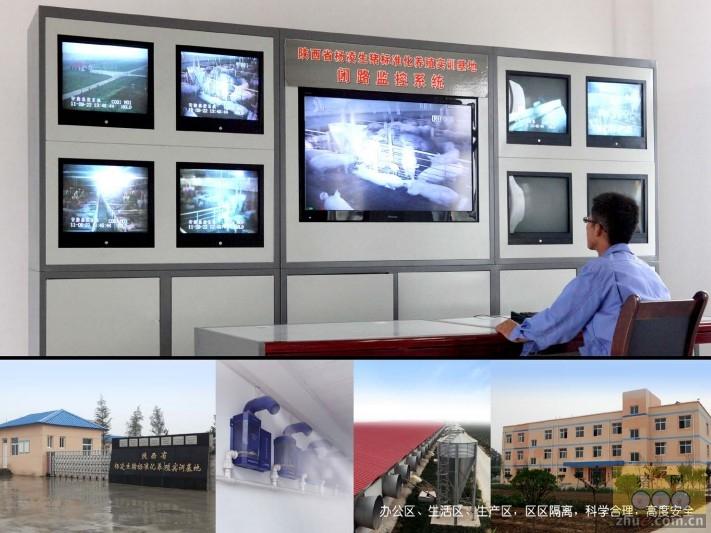 视频: 中国一体化养猪生产的发展――本香模式