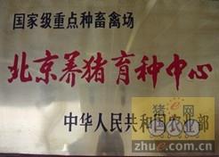 [周]猪e网走访北京养猪育种中心