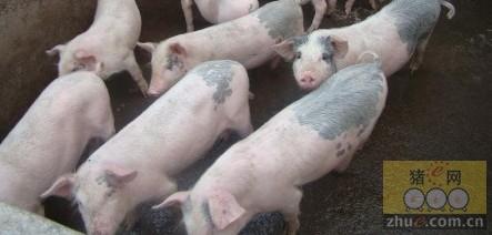 [周]我国生猪行业利润变动趋势分析