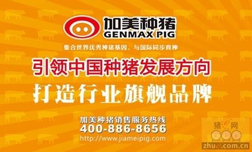 加美引领中国种猪发展方向 打造行业旗舰品牌