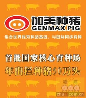 加美种猪官网站 width=