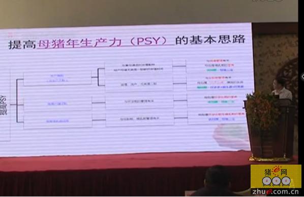 朱中平:提高母猪年生产力(PSY)的基本思路
