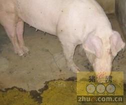 [周]猪腹泻的病因及其治疗技术措施