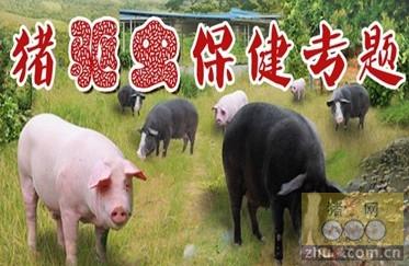 猪常见寄生虫病图片