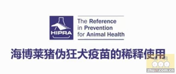 海博莱猪伪狂犬疫苗的稀释使用