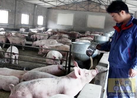 冬季寒冷天气下猪场应每天检查猪精液两次