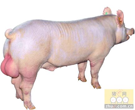 第四届荣昌杯千人畜牧团引领媒体新视频v畜牧公仔加买家图片
