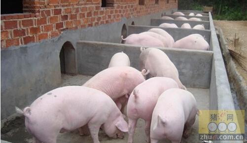 [周]养殖场水泥地面养猪的6个弊端