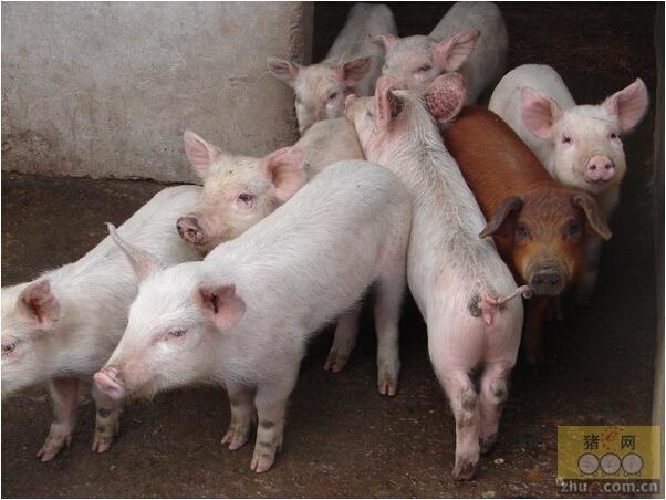 [周]2014年湖南生猪标准规模养殖拟建出炉