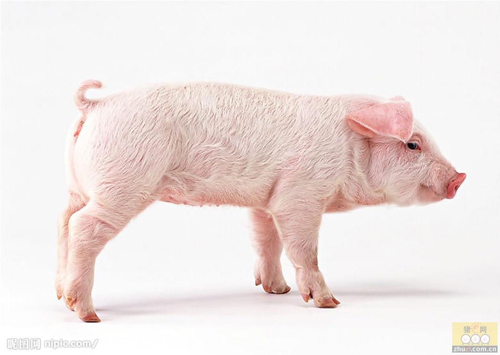 [周]兽药行业的未来发展之路