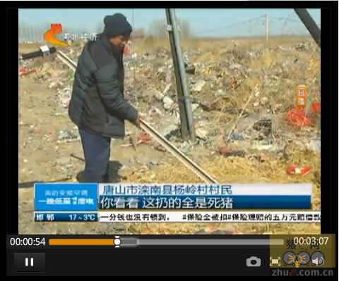 唐山滦南垃圾坑堆放数十头死猪 臭气熏天