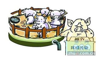 养猪大县不让养猪?禁猪令考验的不止养殖户