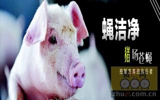 蝇洁净――猪场苍蝇控制方案的执行者