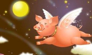 风口上的猪,你先别急着飞!