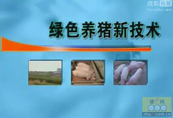 绿色养猪技术视频-农村实用
