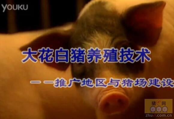 大花白猪养殖技术――推广地区与猪场建设