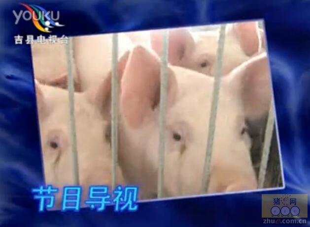 冬季哺乳仔猪的饲养管理