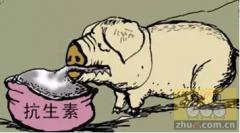 Plectasin或成为养猪业中抗生素的一种有效替代物?