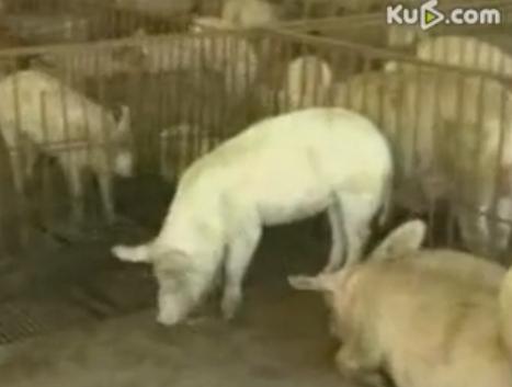 养猪场疾病控制