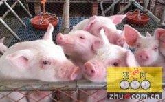 走进一遍天原种猪场的猪舍,看看3亿元都花在哪了?