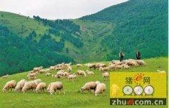 农业部推介发布2016年主导畜牧品种和技术
