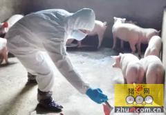 猪场注射器使用要求