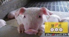 自动化机械化信息化是提升生猪养殖供给侧效率的驱动力
