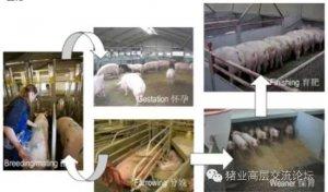 猪场通风设计与创新