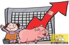 黑龙江省生猪价格创新高 预计上半年将高位运行