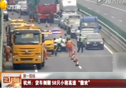 杭州 货车侧翻58只小猪高速撒欢