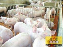 创新引领云南生猪产业快速前行