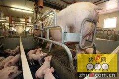 平衡地板:为每头母猪在断奶前赢得一头猪仔