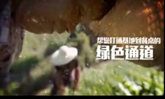 《寻找优质生产者》――海藻猪