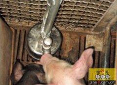 饮水很重要 养猪场猪只饮水设备简介