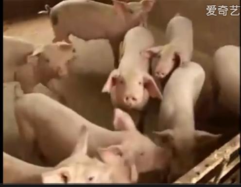 常见猪病防治