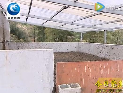 养猪场堆粪池久不清理 猪粪外溢扰民伤环境