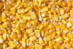 产能结构性过剩 玉米目标价格压至1元/斤