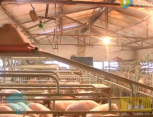 农民课堂猪场精细化管理