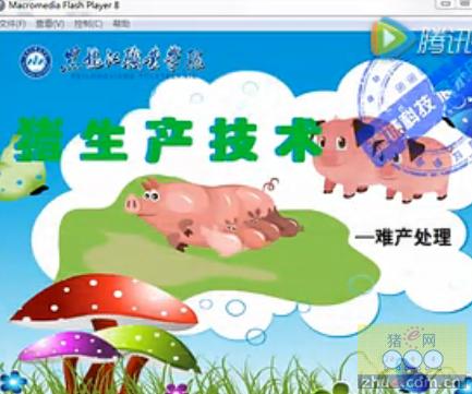 黑龙江职业技术学院――猪生产技术――难产处理