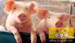 加拿大生猪运输新技术将减少疾病发生