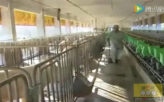现代化养猪场猪圈怎么建设――农村如何养猪长得快