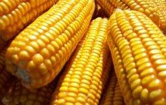 看看五一节期间国内玉米市场发生了啥