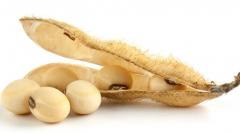 南美供应减少  美国大豆持续上涨