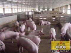 农村猪场猪舍建设要求