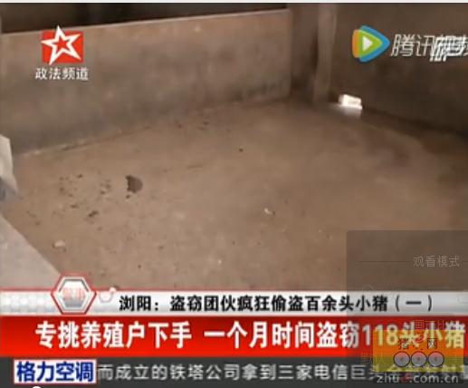 浏阳盗窃团伙疯狂偷盗百余头小猪 一个月时间盗窃118头小猪