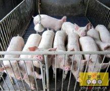 温氏股份:云南区域签下380万头生猪项目
