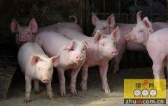 湖南省养猪协会有望投资成立省内最大种公猪站