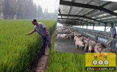 浙江衢州近千猪场实现生态治理