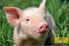 畜牧官员揭露实情:猪价好时,不打压就是万幸